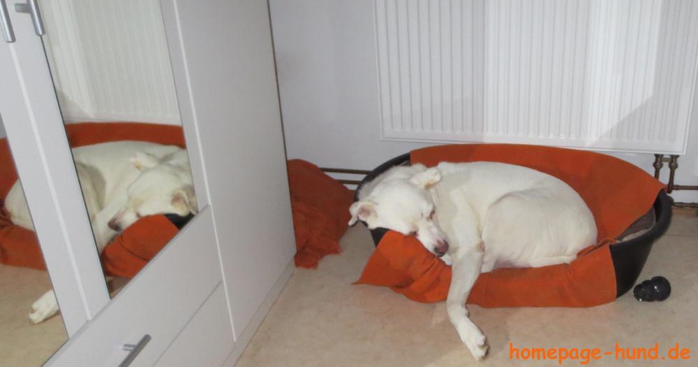 Hundekorb