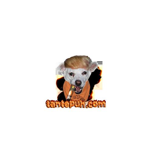 Kalli Hund Trump
