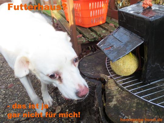Futterhaus Hund Vogel